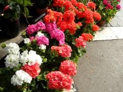 great balcony gardening